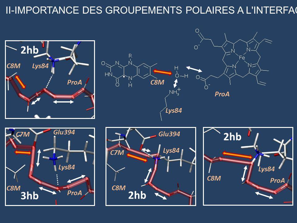 II-IMPORTANCE DES GROUPEMENTS POLAIRES A L'INTERFACE ProA Lys84 C8M 2hb ProA Lys84C8M 2hb ProA Glu394 Lys84 C8M C7M 3hb Lys84 Glu394 C8M C7M 2hb C8M P