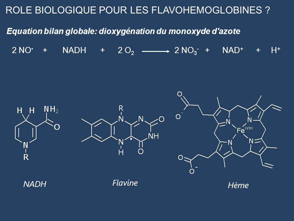 ROLE BIOLOGIQUE POUR LES FLAVOHEMOGLOBINES ? 2 NO +NADH+2 O 2 2 NO 3 - +NAD + +H+H+ Equation bilan globale: dioxygénation du monoxyde d'azote Flavine