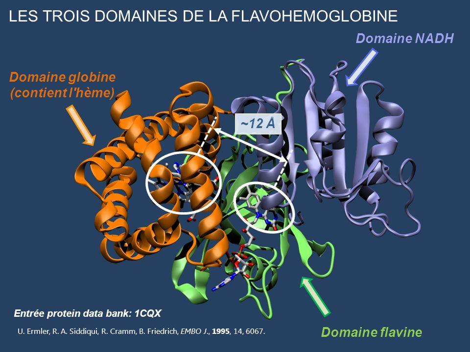 LES TROIS DOMAINES DE LA FLAVOHEMOGLOBINE Domaine globine (contient l'hème) Domaine flavine Domaine NADH ~12 Å Entrée protein data bank: 1CQX U. Ermle