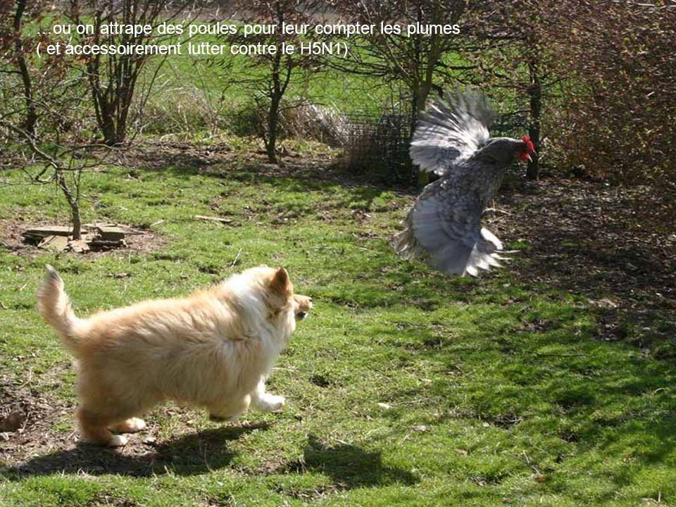 Puis on joue à cache-cache dans les herbes fofolles …