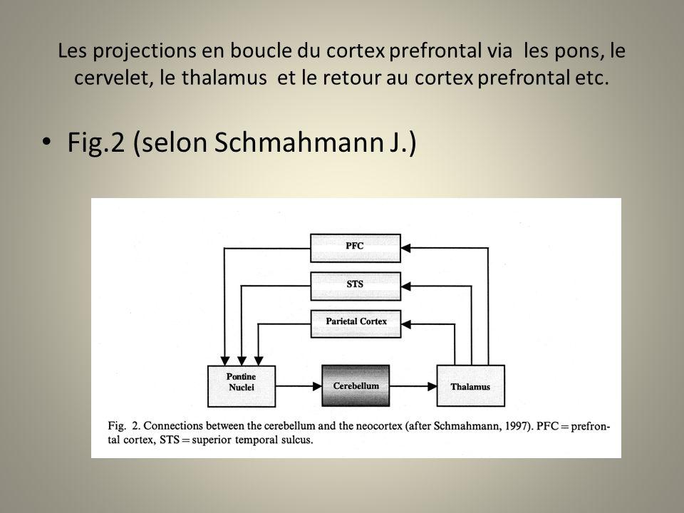 Les projections en boucle du cortex prefrontal via les pons, le cervelet, le thalamus et le retour au cortex prefrontal etc.