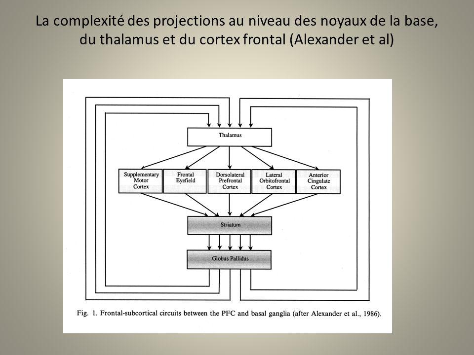 La complexité des projections au niveau des noyaux de la base, du thalamus et du cortex frontal (Alexander et al)
