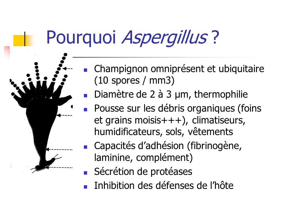 Pourquoi Aspergillus ? Champignon omniprésent et ubiquitaire (10 spores / mm3) Diamètre de 2 à 3 µm, thermophilie Pousse sur les débris organiques (fo
