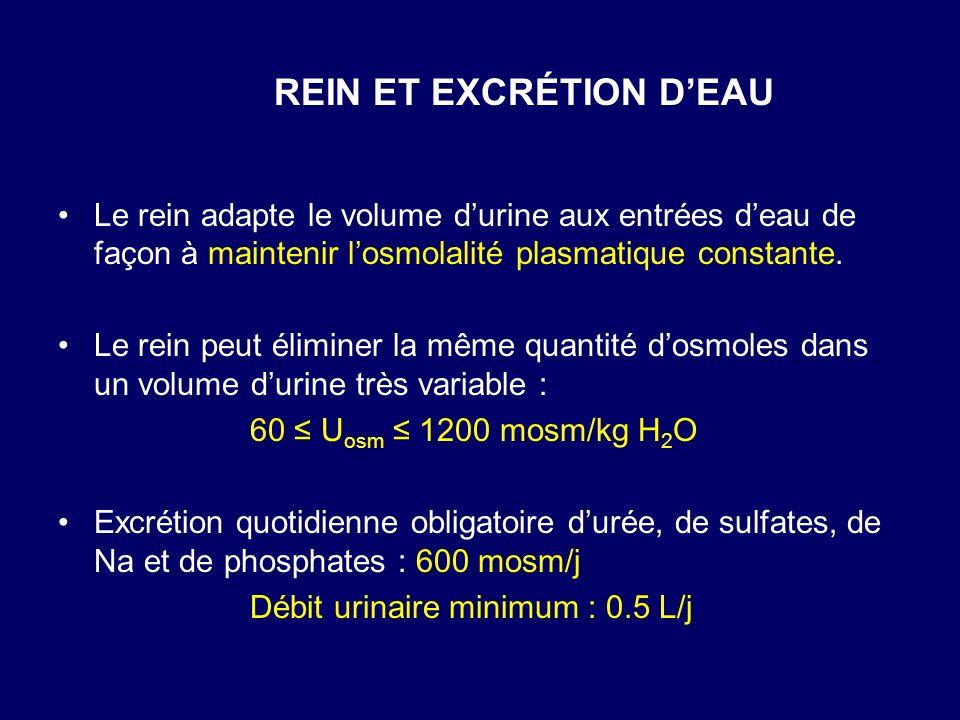 Le rein adapte le volume durine aux entrées deau de façon à maintenir losmolalité plasmatique constante. Le rein peut éliminer la même quantité dosmol