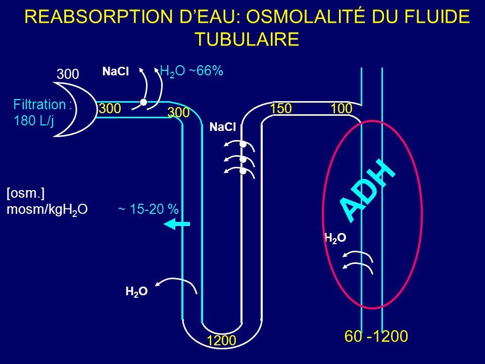 REABSORPTION DEAU: OSMOLALITÉ DU FLUIDE TUBULAIRE 300 [osm.] mosm/kgH 2 O 300 1200 150100 ~ 15-20 % ADH Filtration : 180 L/j H 2 O 66% NaCl H2OH2O H2O