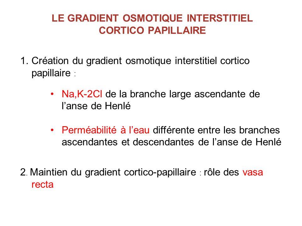 LE GRADIENT OSMOTIQUE INTERSTITIEL CORTICO PAPILLAIRE 1.Création du gradient osmotique interstitiel cortico papillaire : Na,K-2Cl de la branche large