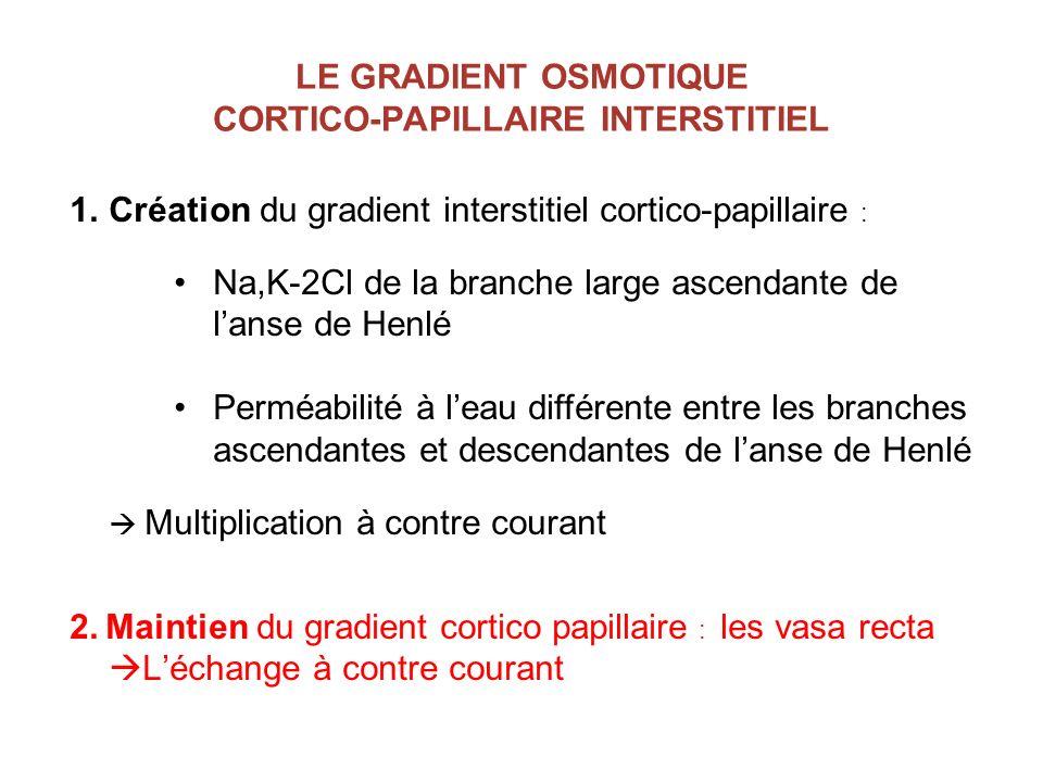 LE GRADIENT OSMOTIQUE CORTICO-PAPILLAIRE INTERSTITIEL 1.Création du gradient interstitiel cortico-papillaire : Na,K-2Cl de la branche large ascendante
