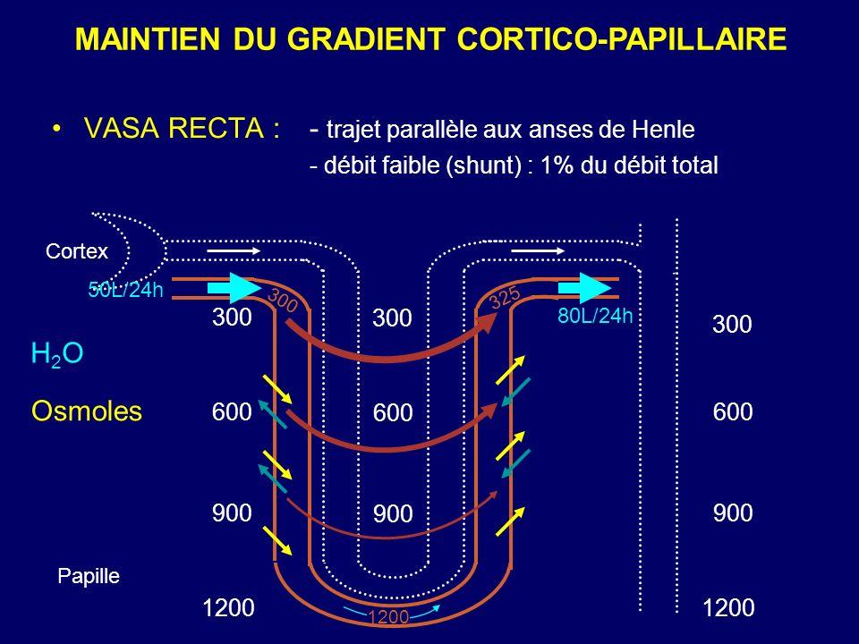 MAINTIEN DU GRADIENT CORTICO-PAPILLAIRE Cortex Papille 80L/24h 300 600 900 1200 300 1200 H2OH2O Osmoles 325 VASA RECTA : - trajet parallèle aux anses
