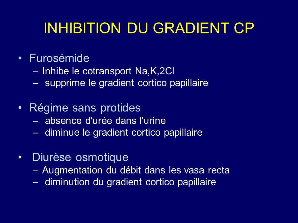 INHIBITION DU GRADIENT CP Furosémide –Inhibe le cotransport Na,K,2Cl – supprime le gradient cortico papillaire Régime sans protides – absence d'urée d