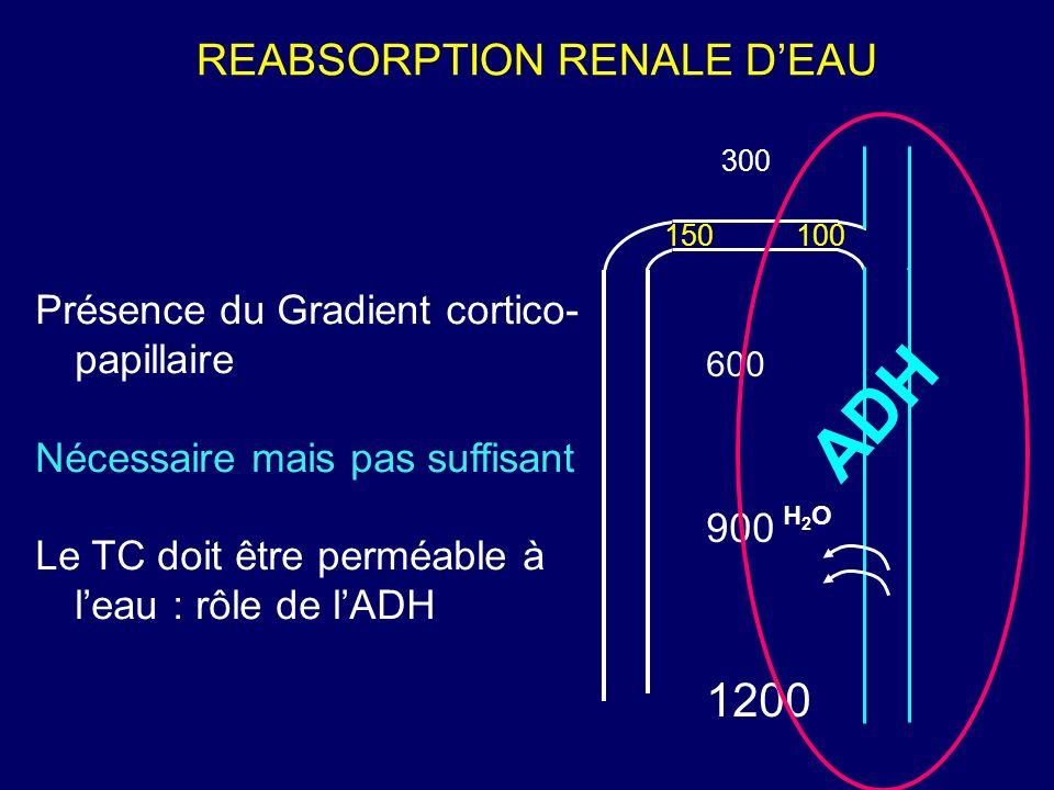 REABSORPTION RENALE DEAU 300 1200 600 900 150100 ADH H2OH2O Présence du Gradient cortico- papillaire Nécessaire mais pas suffisant Le TC doit être per
