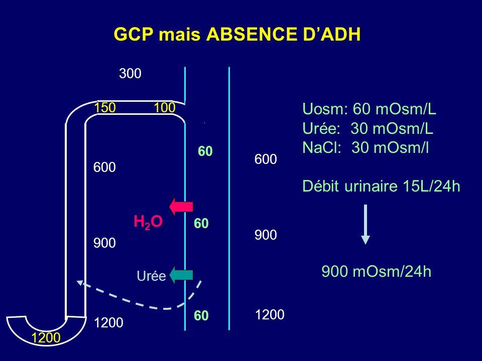 GCP mais ABSENCE DADH 300 1200 600 900 1200 150100 H2OH2O 1200 600 900 Urée 60 Uosm: 60 mOsm/L Urée: 30 mOsm/L NaCl: 30 mOsm/l Débit urinaire 15L/24h