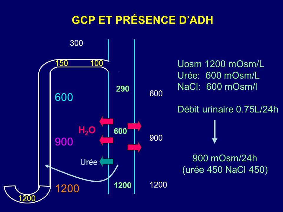 GCP ET PRÉSENCE DADH 300 1200 600 900 1200 150100 H2OH2O 1200 600 900 Urée 290 600 1200 Uosm 1200 mOsm/L Urée: 600 mOsm/L NaCl: 600 mOsm/l Débit urina