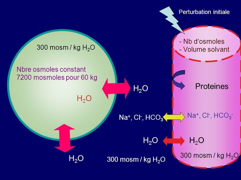 300 mosm / kg H 2 O H2OH2O H2OH2O H2OH2O Na +, Cl -, HCO 3 - H2OH2OH2OH2O Proteines Nbre osmoles constant 7200 mosmoles pour 60 kg Perturbation initia