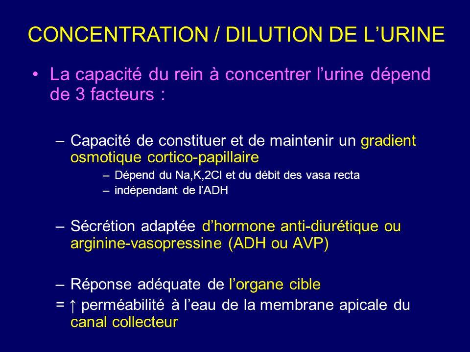 La capacité du rein à concentrer lurine dépend de 3 facteurs : –Capacité de constituer et de maintenir un gradient osmotique cortico-papillaire –Dépen