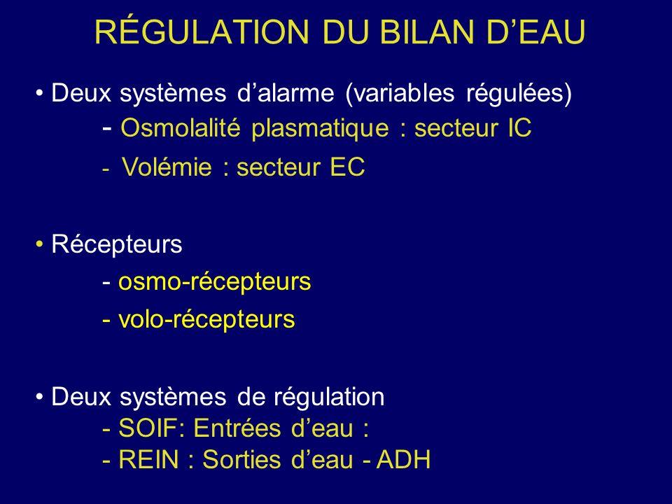 RÉGULATION DU BILAN DEAU Deux systèmes dalarme (variables régulées) - Osmolalité plasmatique : secteur IC - Volémie : secteur EC Récepteurs - osmo-réc