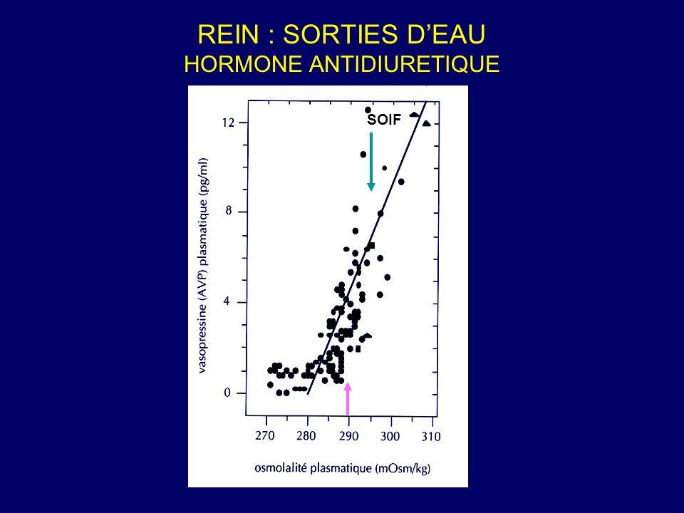 REIN : SORTIES DEAU HORMONE ANTIDIURETIQUE SOIF