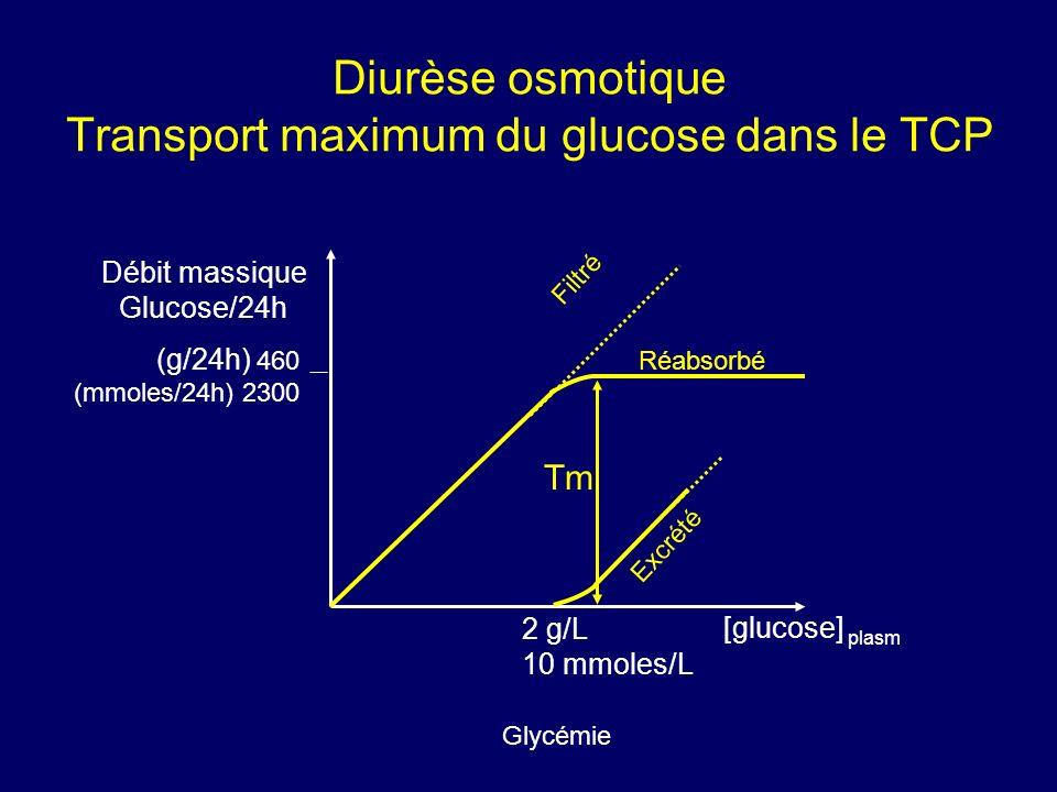 Diurèse osmotique Transport maximum du glucose dans le TCP [glucose] plasm 2 g/L 10 mmoles/L Débit massique Glucose/24h Filtré Excrété Tm Réabsorbé (g