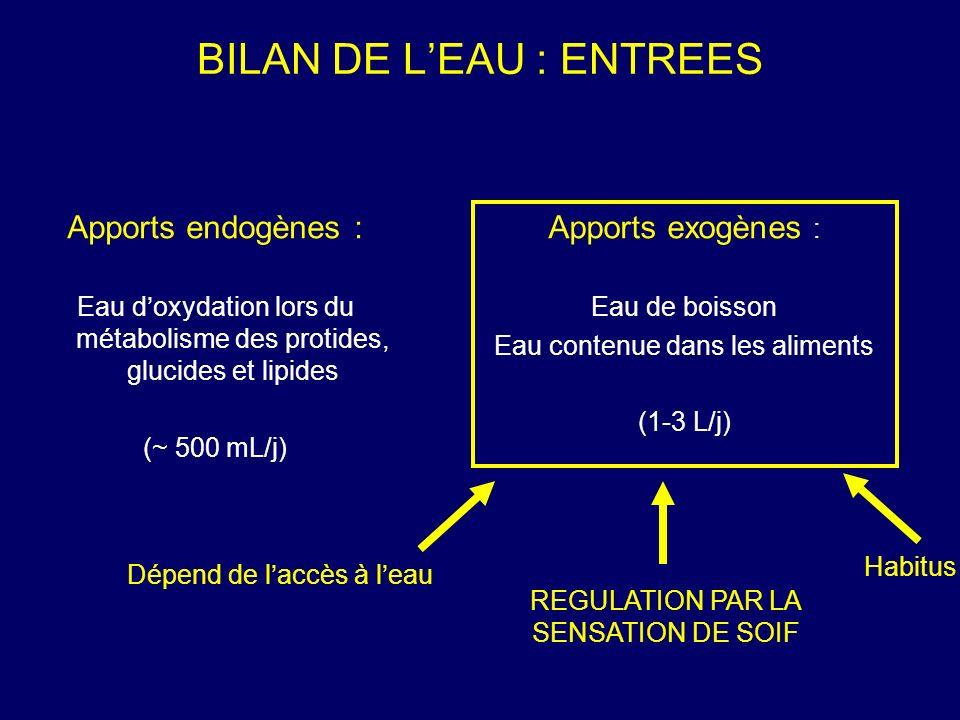 BILAN DE LEAU : SORTIES Sorties extrarénales : Cutanées (sueur) Respiratoires Fécales (faibles en situation normale ~ 500 mL/j) Sorties rénales : ~ 1% des 180 L/j deau filtrée (~ 1.8 L/j) REGULATION PAR LE REIN DU VOLUME DEAU EXCRETE Bilan nul d eau