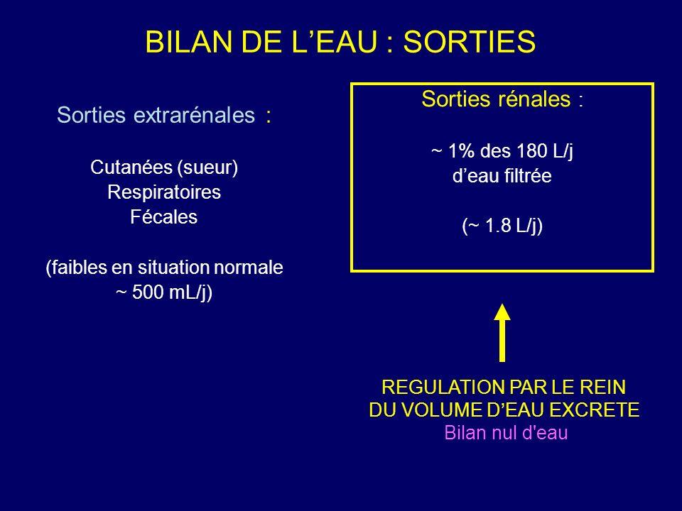 BILAN DE LEAU : SORTIES Sorties extrarénales : Cutanées (sueur) Respiratoires Fécales (faibles en situation normale ~ 500 mL/j) Sorties rénales : ~ 1%