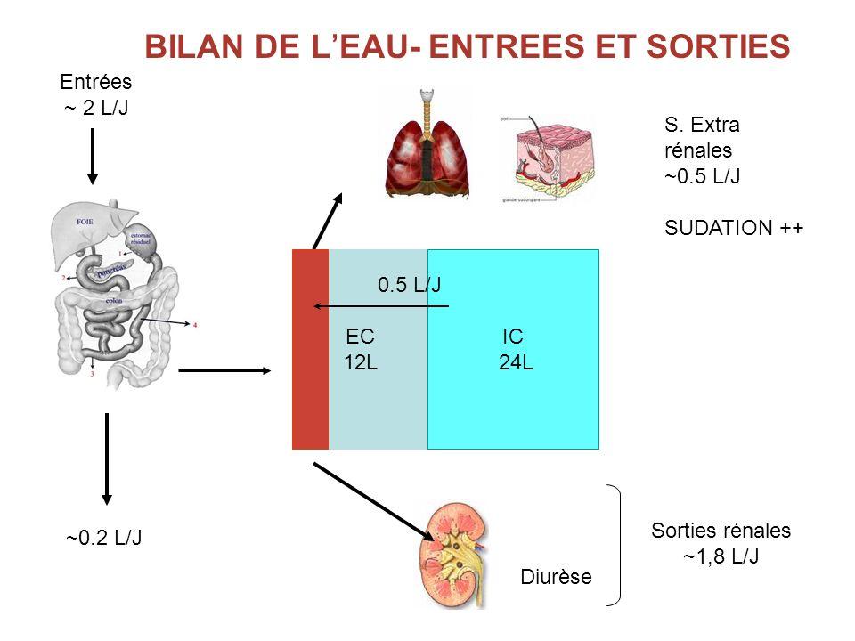 S. Extra rénales ~0.5 L/J SUDATION ++ Entrées ~ 2 L/J Sorties rénales ~1,8 L/J BILAN DE LEAU- ENTREES ET SORTIES EC 12L IC 24L ~0.2 L/J 0.5 L/J Diurès