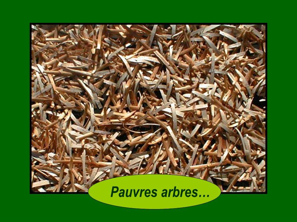 - Après avoir jeté les feuilles, ils achètent quelque chose quils appellent du paillis. Ils le rapportent chez eux et létale autour des arbres pour re