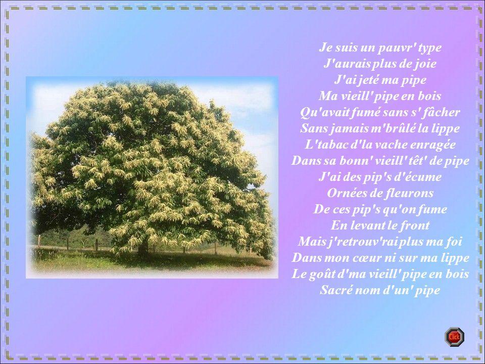 Auprès de mon arbre Je vivais heureux J'aurais jamais dû M'éloigner d' mon arbre Auprès de mon arbre Je vivais heureux J'aurais jamais dû Le quitter d