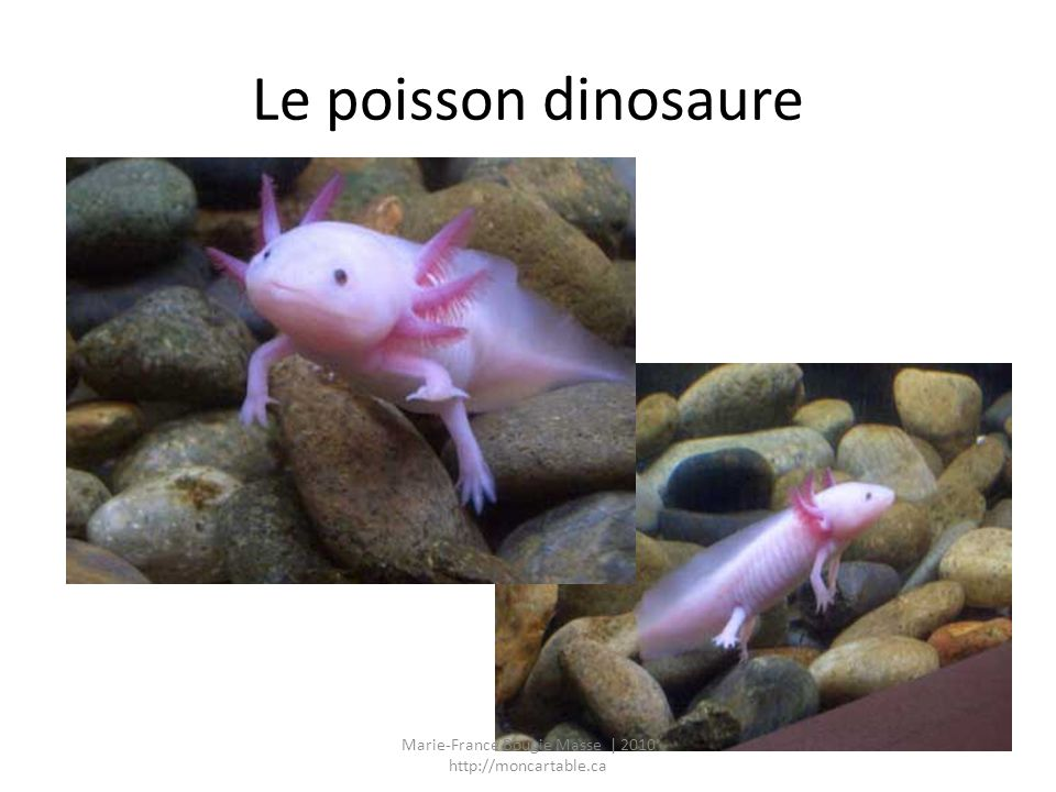 Le poisson dinosaure Marie-France Bougie Masse | 2010 http://moncartable.ca