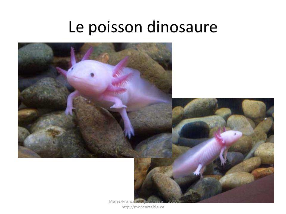 Le poissonnier Marie-France Bougie Masse | 2010 http://moncartable.ca