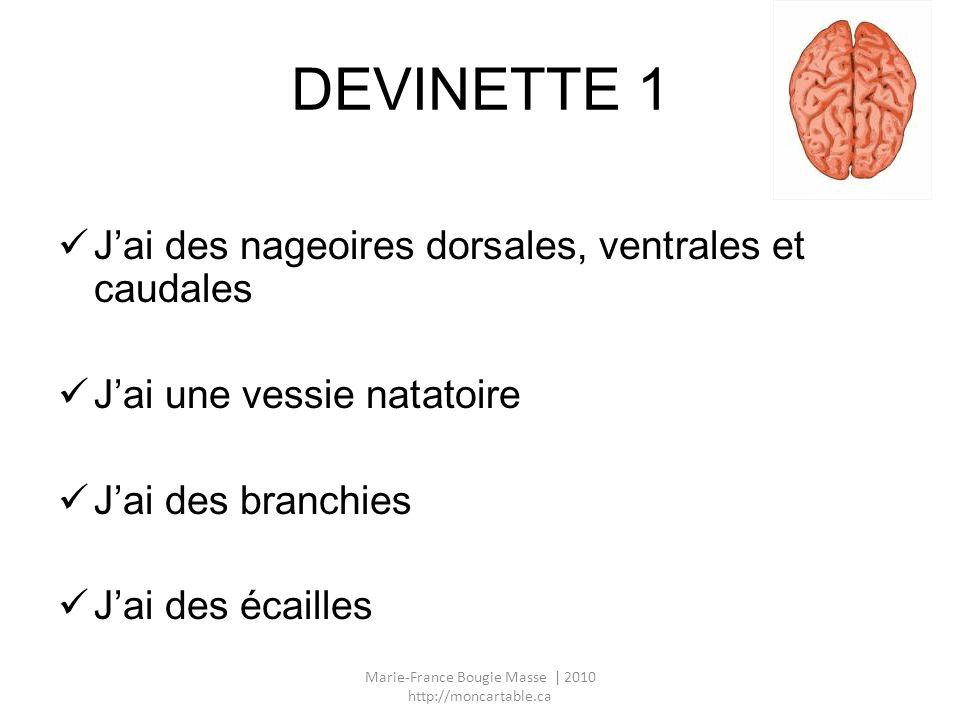 DEVINETTE 1 Jai des nageoires dorsales, ventrales et caudales Jai une vessie natatoire Jai des branchies Jai des écailles Marie-France Bougie Masse |