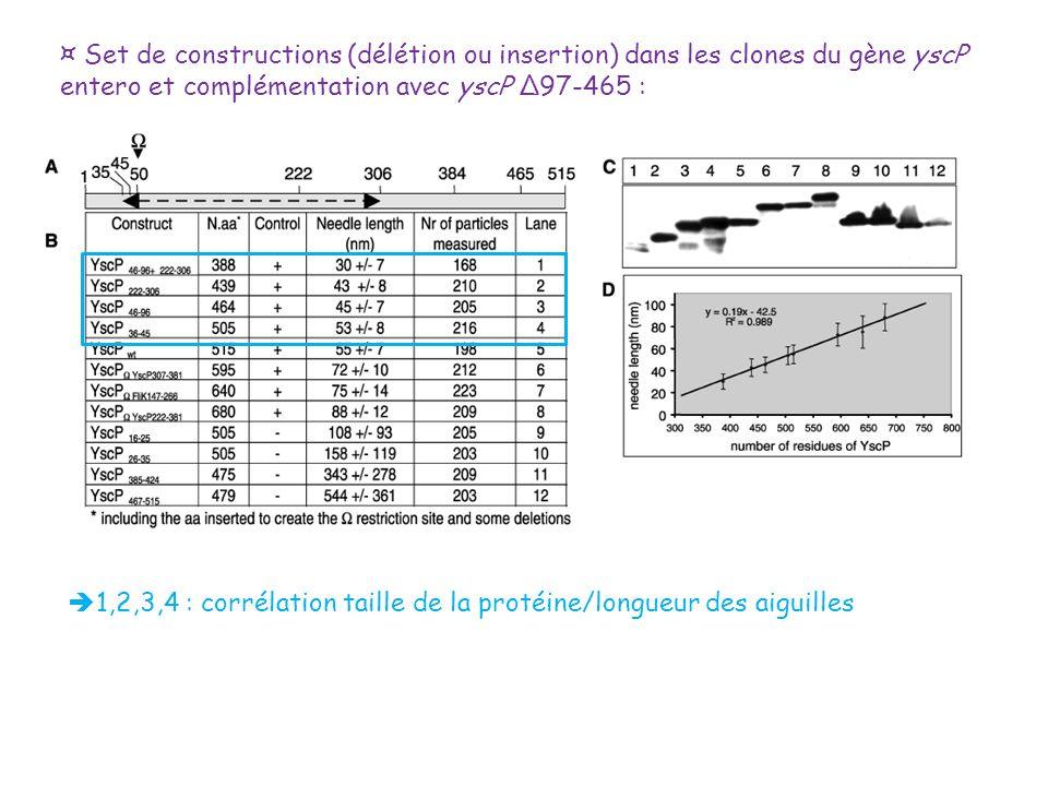 1,2,3,4 : corrélation taille de la protéine/longueur des aiguilles