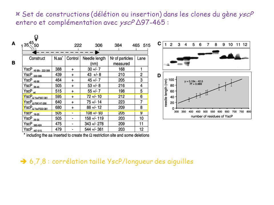 ¤ Set de constructions (délétion ou insertion) dans les clones du gène yscP entero et complémentation avec yscP Δ97-465 : 6,7,8 : corrélation taille Y