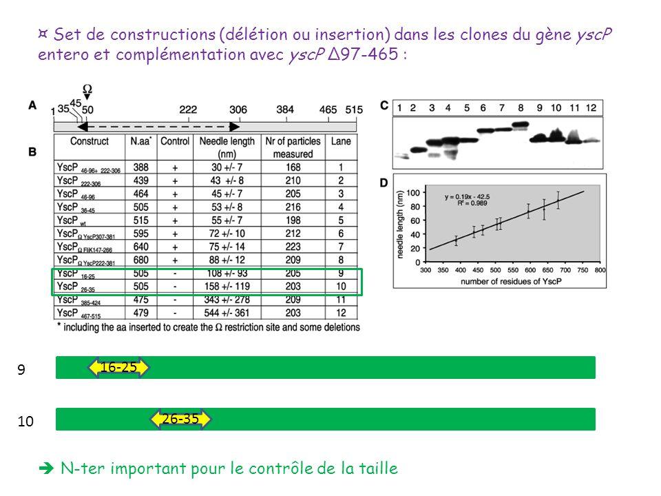 ¤ Set de constructions (délétion ou insertion) dans les clones du gène yscP entero et complémentation avec yscP Δ97-465 : 16-25 26-35 9 10 N-ter impor