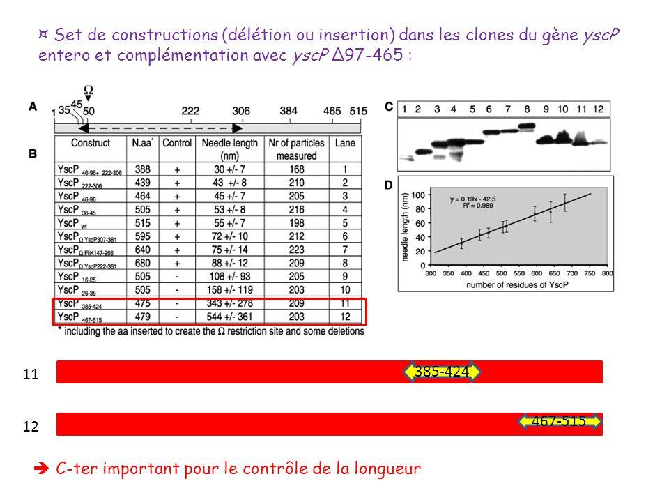¤ Set de constructions (délétion ou insertion) dans les clones du gène yscP entero et complémentation avec yscP Δ97-465 : 385-424 467-515 11 12 C-ter