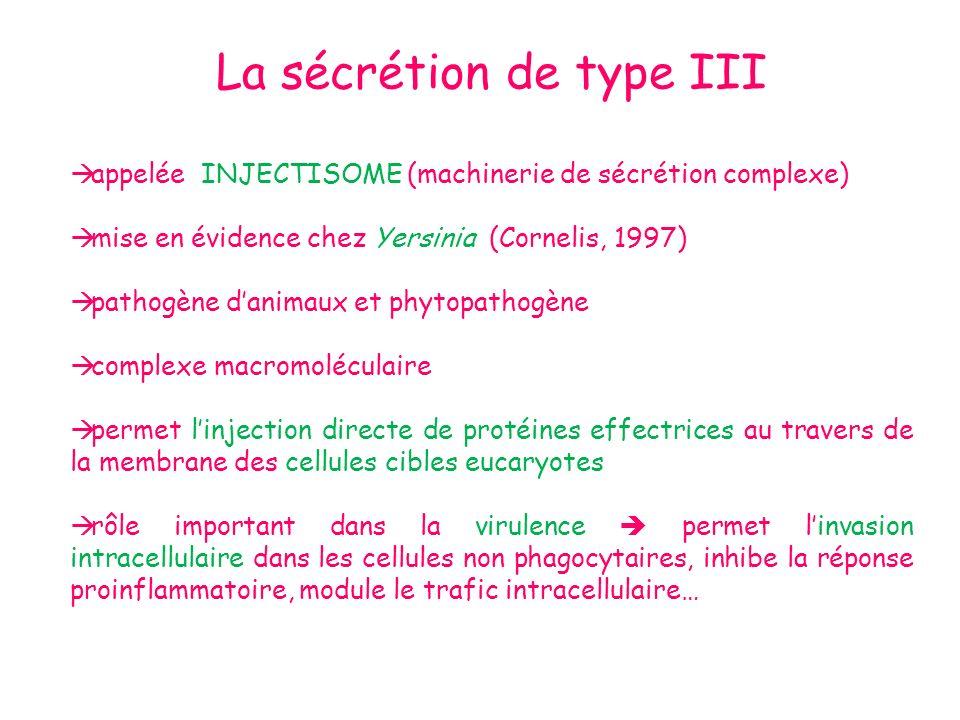 La sécrétion de type III appelée INJECTISOME (machinerie de sécrétion complexe) mise en évidence chez Yersinia (Cornelis, 1997) pathogène danimaux et