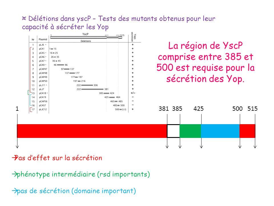 ¤ Délétions dans yscP – Tests des mutants obtenus pour leur capacité à sécréter les Yop 1 381 385 425 500 515 Pas deffet sur la sécrétion phénotype in