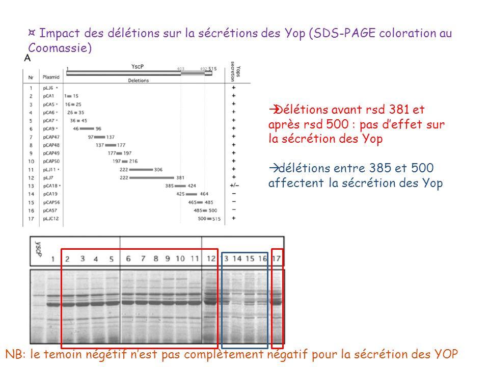 ¤ Impact des délétions sur la sécrétions des Yop (SDS-PAGE coloration au Coomassie) Délétions avant rsd 381 et après rsd 500 : pas deffet sur la sécré
