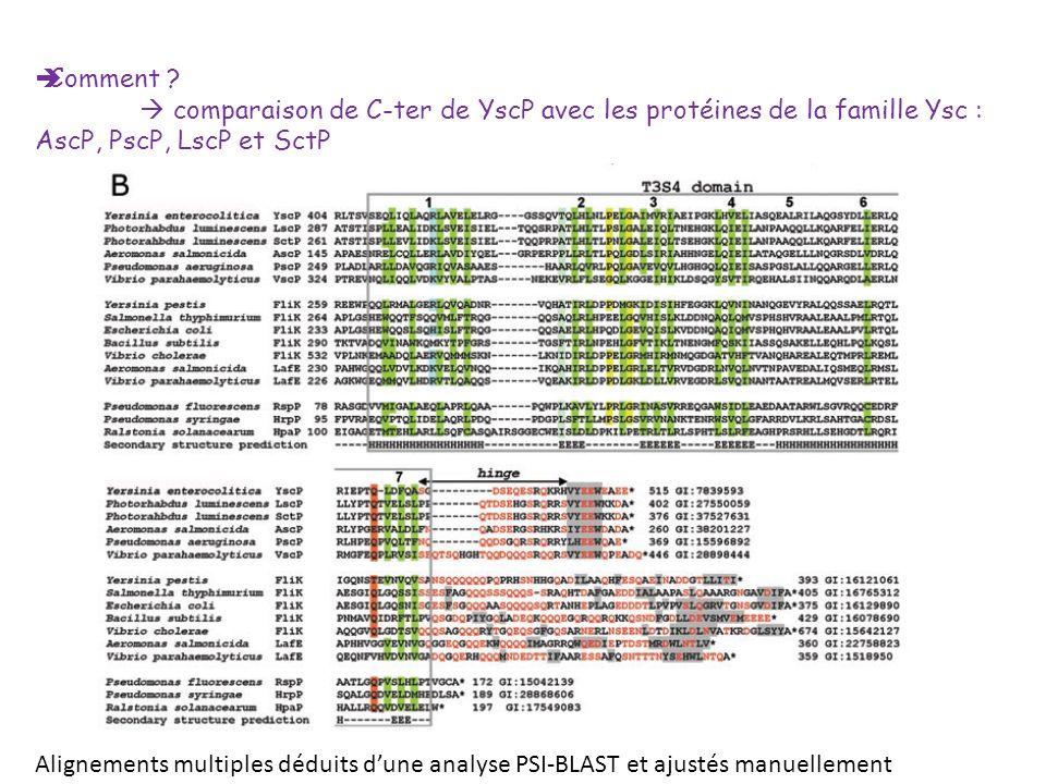 Comment ? comparaison de C-ter de YscP avec les protéines de la famille Ysc : AscP, PscP, LscP et SctP Alignements multiples déduits dune analyse PSI-