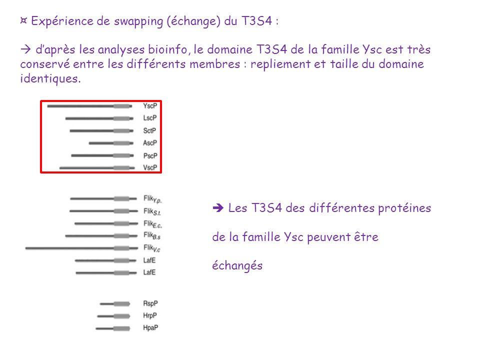 ¤ Expérience de swapping (échange) du T3S4 : daprès les analyses bioinfo, le domaine T3S4 de la famille Ysc est très conservé entre les différents mem