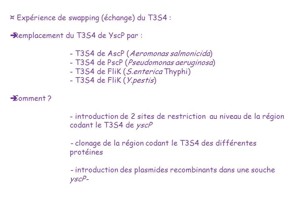 ¤ Expérience de swapping (échange) du T3S4 : Remplacement du T3S4 de YscP par : - T3S4 de AscP (Aeromonas salmonicida) - T3S4 de PscP (Pseudomonas aer