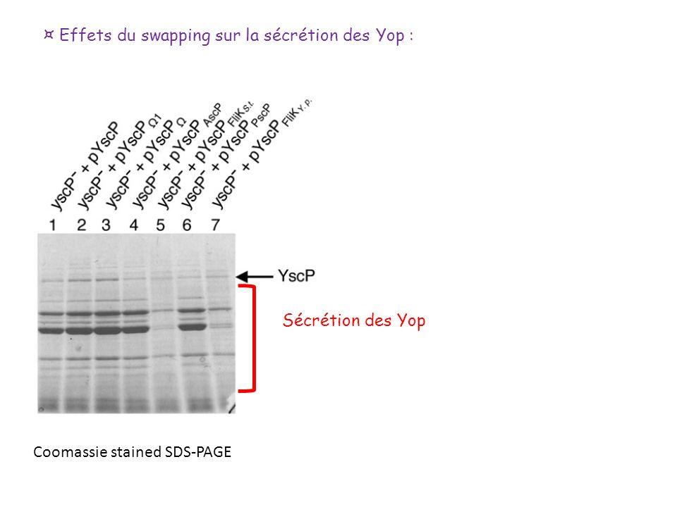 ¤ Effets du swapping sur la sécrétion des Yop : Coomassie stained SDS-PAGE Sécrétion des Yop