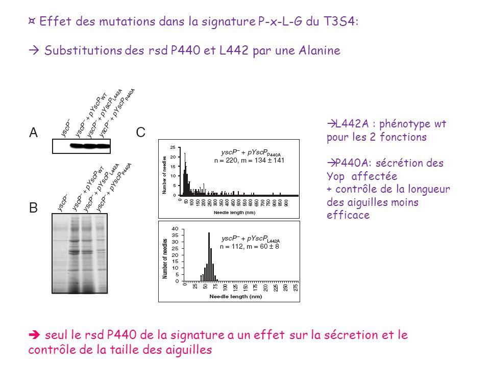 ¤ Effet des mutations dans la signature P-x-L-G du T3S4: Substitutions des rsd P440 et L442 par une Alanine L442A : phénotype wt pour les 2 fonctions