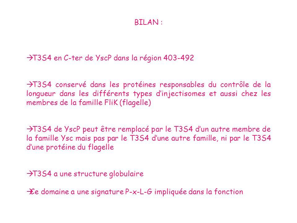 BILAN : T3S4 en C-ter de YscP dans la région 403-492 T3S4 conservé dans les protéines responsables du contrôle de la longueur dans les différents type