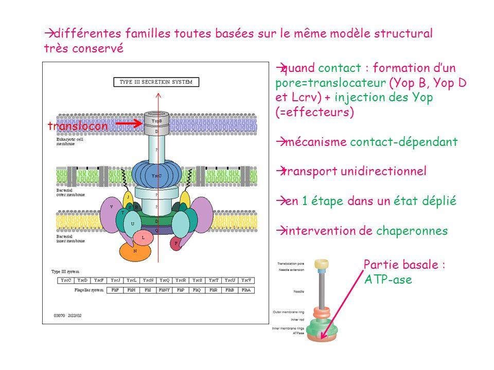 ¤ Expérience de swapping (échange) du T3S4 : daprès les analyses bioinfo, le domaine T3S4 de la famille Ysc est très conservé entre les différents membres : repliement et taille du domaine identiques.