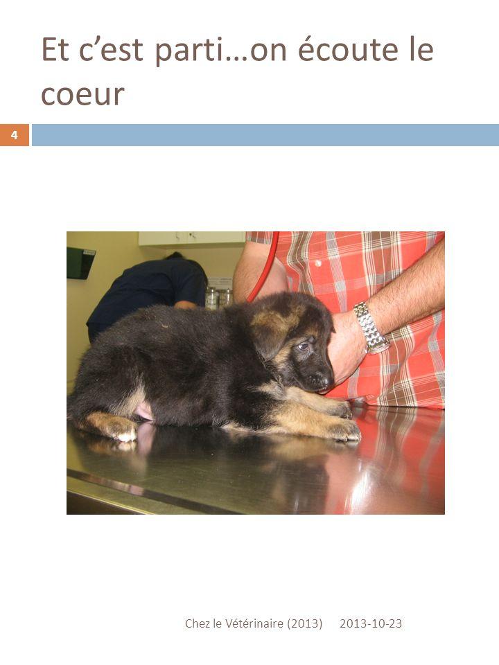 Elle prépare les 10 fioles pour nos chiots 2013-10-23 Chez le Vétérinaire (2013) 3