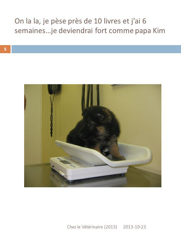 On la la, je pèse près de 10 livres et jai 6 semaines…je deviendrai fort comme papa Kim 2013-10-23 Chez le Vétérinaire (2013) 5