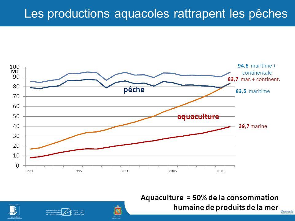 Les productions aquacoles rattrapent les pêches Aquaculture = 50% de la consommation humaine de produits de la mer aquaculture pêche