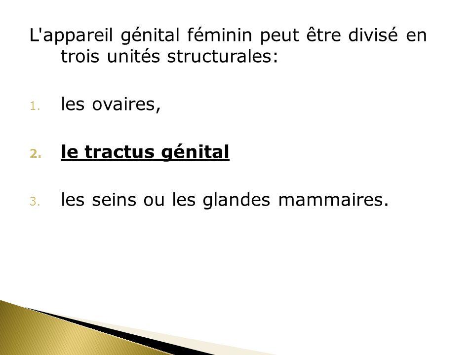 L'appareil génital féminin peut être divisé en trois unités structurales: 1. les ovaires, 2. le tractus génital 3. les seins ou les glandes mammaires.