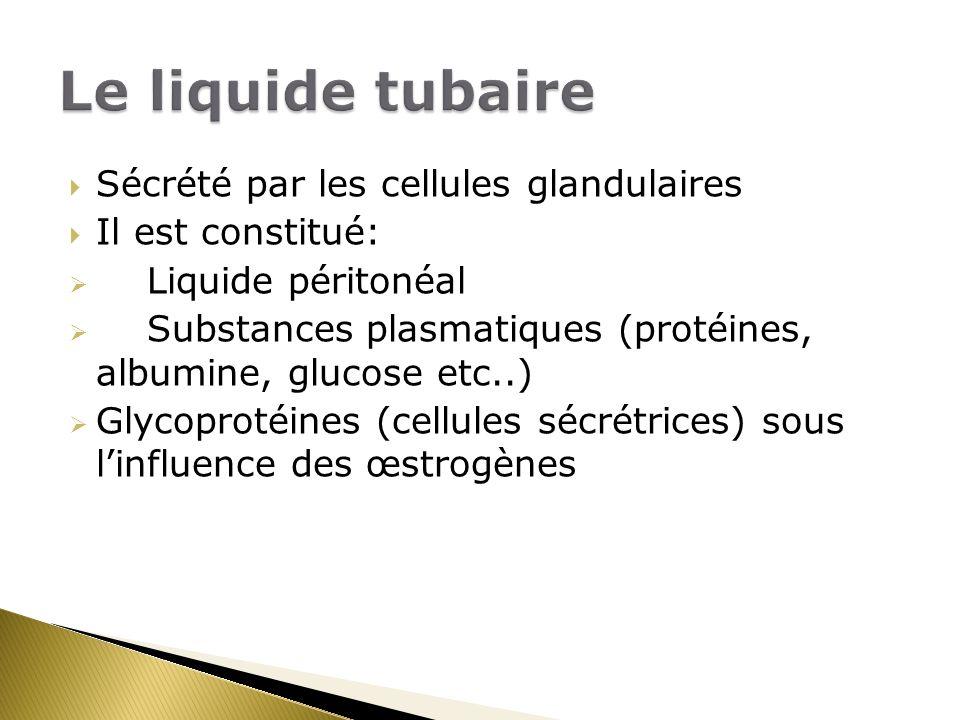 Sécrété par les cellules glandulaires Il est constitué: Liquide péritonéal Substances plasmatiques (protéines, albumine, glucose etc..) Glycoprotéines