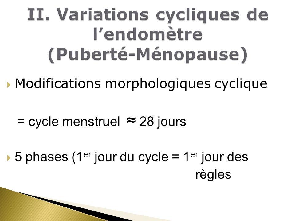 Modifications morphologiques cyclique = cycle menstruel 28 jours 5 phases (1 er jour du cycle = 1 er jour des règles
