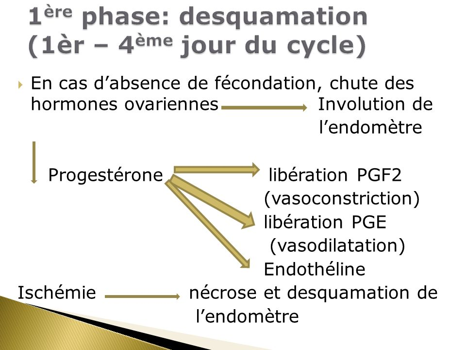 En cas dabsence de fécondation, chute des hormones ovariennes Involution de lendomètre Progestérone libération PGF2 (vasoconstriction) libération PGE (vasodilatation) Endothéline Ischémie nécrose et desquamation de lendomètre